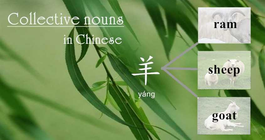 Collective Nouns In Chinese