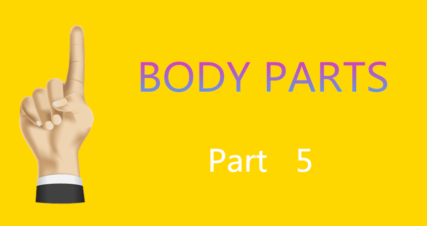 Learn Chinese Vocabulary In An Easy Way – Body Part 5