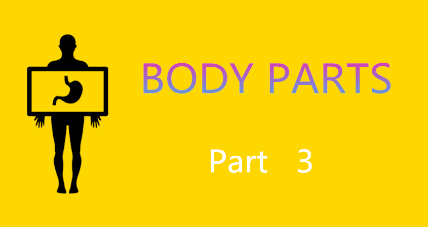 Learn Chinese Vocabulary In An Easy Way – Body Part 3