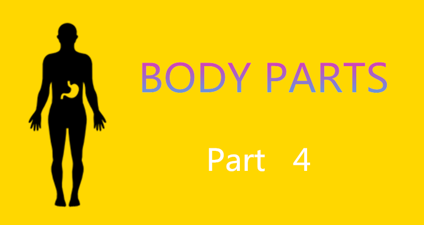 Learn Chinese Vocabulary In An Easy Way – Body Part 4
