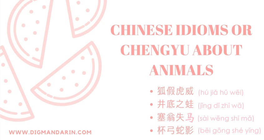 Chinese Idioms Or Chéngyǔ About Animals
