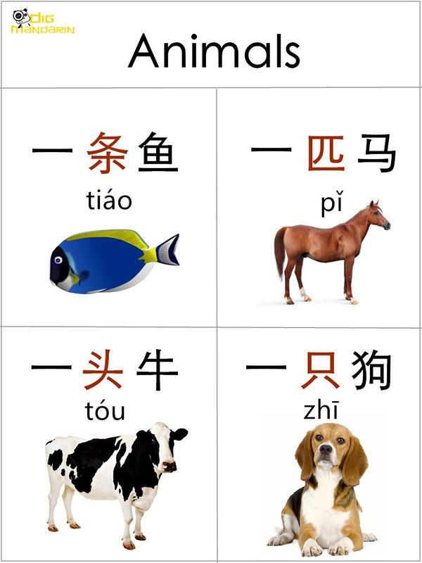 measure words animals