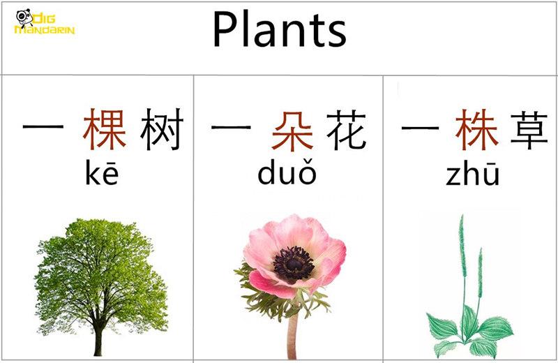 measure words plants